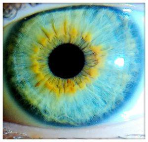 oeil avec iris bleu et jaune en iridologie